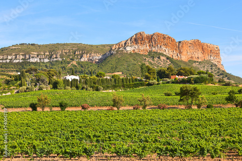 canvas print picture Vineyards near Cassis, France.
