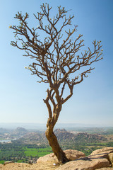 Tree on the rocky cliff