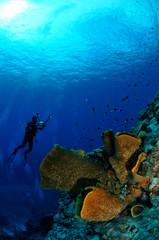 Diver, barrel sponge Verongula gigantea in Banda underwater
