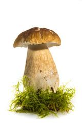 Cèpe de Bordeau, Boletus edulis, cèpe,bolet, sur fond blanc