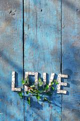 word love ??of wooden dominoes