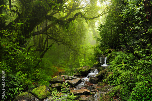 Tuinposter Bossen Selva de Nepal