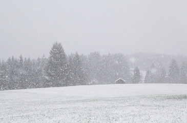 snowstorm over meadow with hut