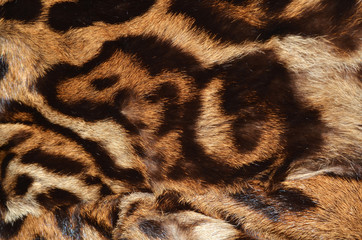 fur of ocelot