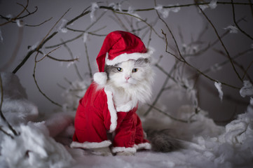 cat dressed as Santa Claus in the winter forest