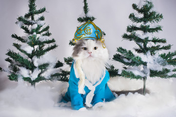 cat dressed as Snow Maiden in the fir forest