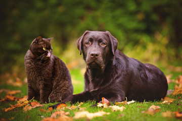 brown cat and dog outdoors in autumn