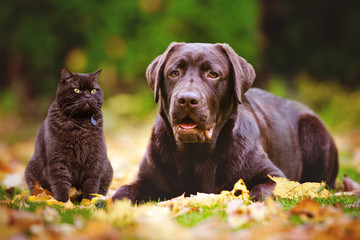 cat and dog together outdoors