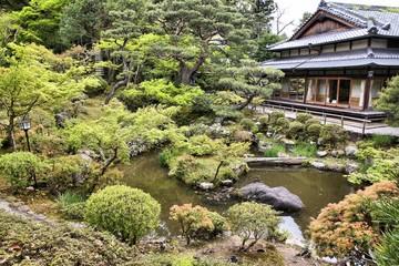 Tea garden in Nara, Japan