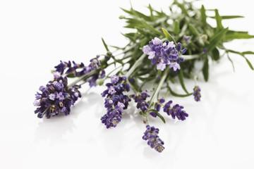 Strauß vom Lavendel (Lavandula angustifolia), erhöhte Ansich