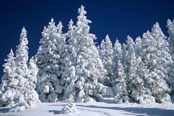 Deutschland, Bayern, Spitzing, schneebedeckte Bäumen
