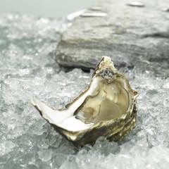 Auster auf zerstoßenem Eis, close-up