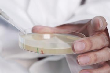 Antibiotika in der Petrischale