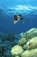 Taucher über Korallen
