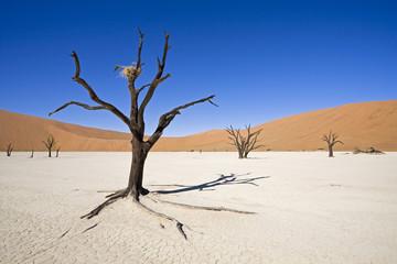 Afrika, Namibia, Deadvlei, Abgestorbene Bäume in der Wüste