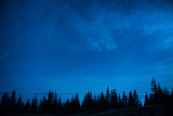Forest of pine trees under blue dark night sky - 74026369