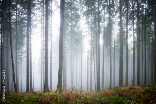 Fototapeta Mysterious fog in the green forest