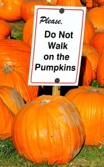 Please do not walk on the pumpkins sign