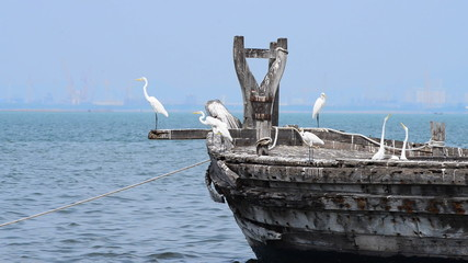 Old fishing ship with white egret