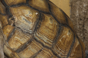 close up Turtle carapace
