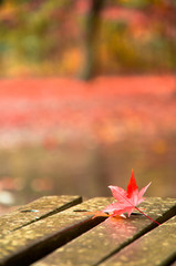 秋雨と紅葉2