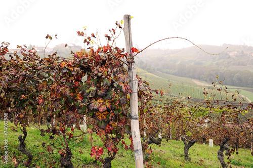 Poster Heuvel vineyards in october