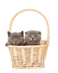 two kittens in basket looking at camera. isolated on white backg