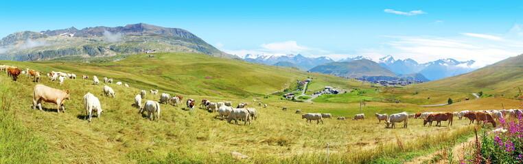 Pâturage à l' Alpe d' Huez