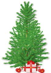 fir vector isolated