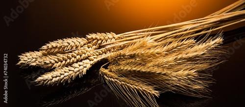 Getreide sorten