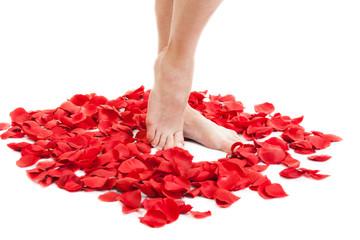 beauty female feet in scarlet rose petals