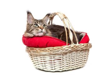 ,Кошка в корзине на белом фоне