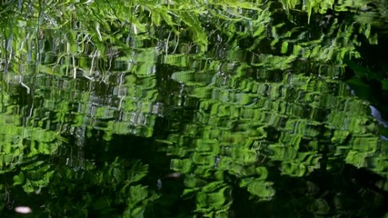 Green fern leaves reflected in water with ripples