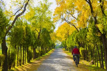 ağaçlar arasında bisiklet sürmek