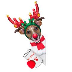 reindeer dog