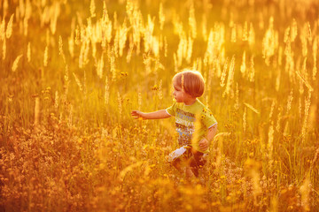Child in the meadow at sunset