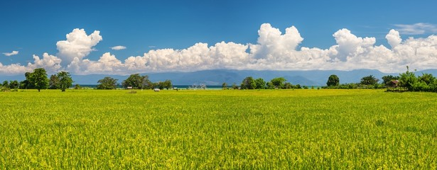 Indonesian rice fields landscape