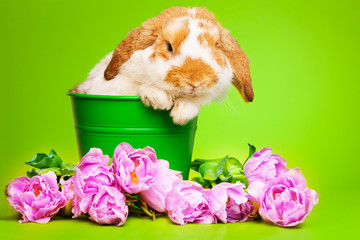 Cute bunny with pink flowers sits inside the pot