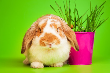 Close up spring view of cute bunny with pink pot