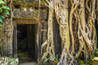 Постер, плакат: Ta Prohm Temple in Angkor Wat Tomb Raider Temple Cambodia