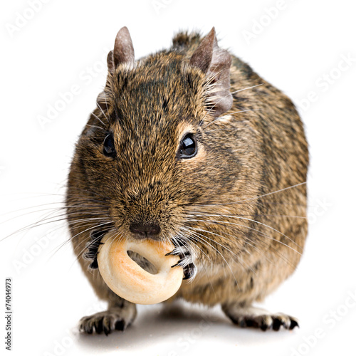 Keuken foto achterwand Eekhoorn hamster gnawing bake