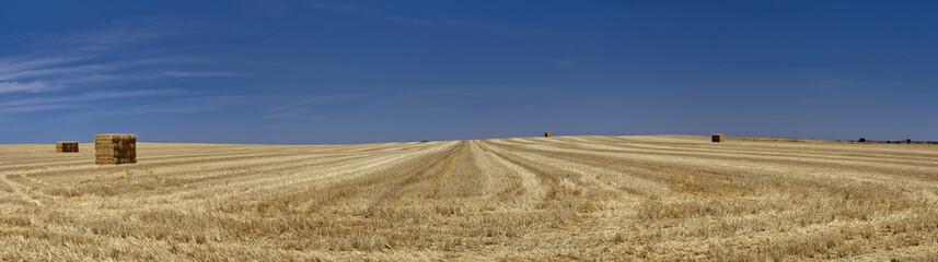 Tierra de Castilla. Gran panorama.