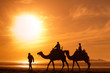 silhouettes of camels at sunset - 74047771