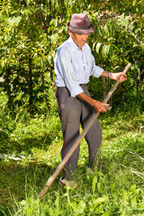 Old farmer using scythe to mow the grass