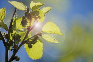 hojas de los árboles
