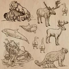 Animals around the World (part 5). Hand drawn vector pack.