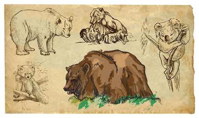 Animals, theme: BEARS - hand drawn vector pack