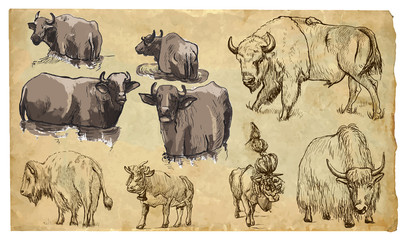Animals, theme: BOVIDAE (cows, bisons, yak, buffalo). Vector pac
