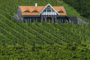 Vineyards in Hungary
