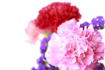 pink Flower in soft color style - Stock Image